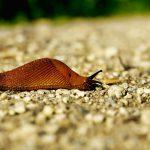 Schneckenkorn: Warum funktioniert es nicht? Gefahren & Probleme