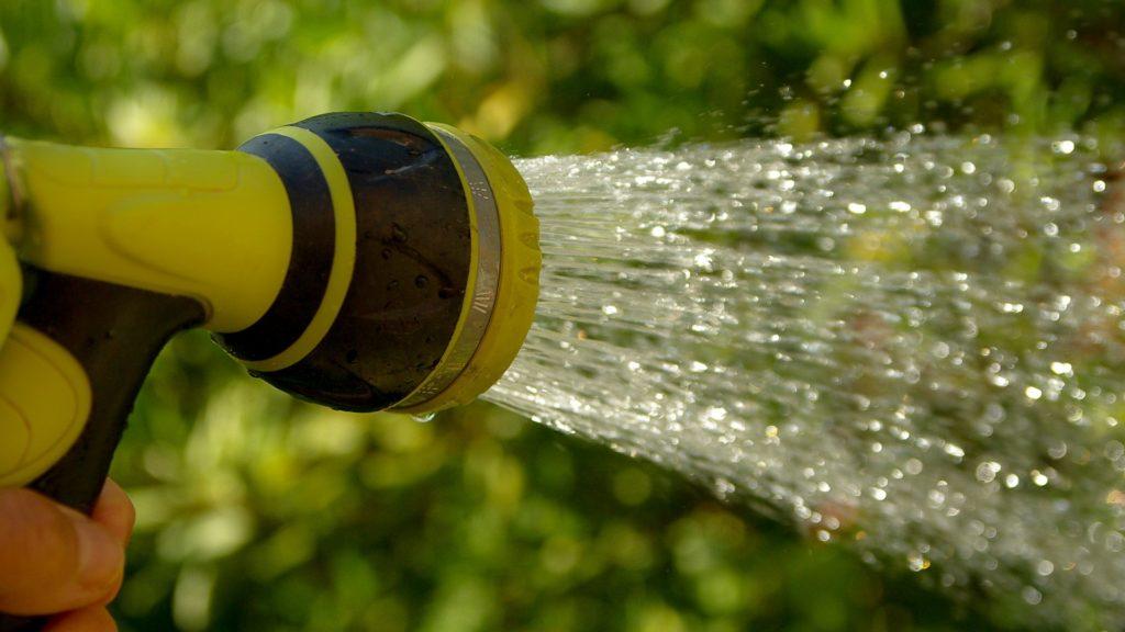 Bewässerung von Buschbohnen