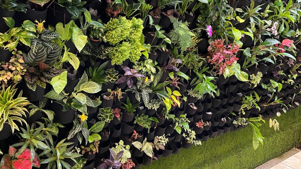Vertikaler Garten Grüne Wand